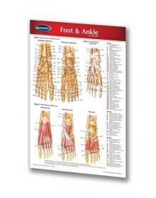 FOOT & ANKLE CHART - POCKET SIZE